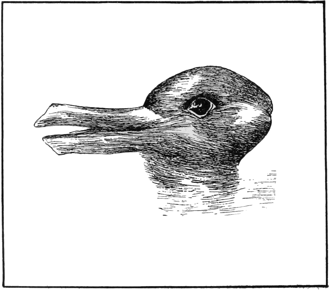 Optical Illusion of a Duck or a Rabbit Head